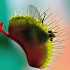 GP axed for treating cancer with Venus flytrap