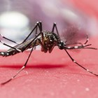 Third case of Zika virus diagnosed in Qld, Tonga declares epidemic