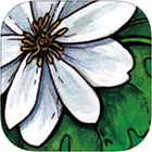 Clinical App: Independent info on herbs and other CAM
