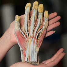 Aussie team develops 3D-printed 'cadavers'
